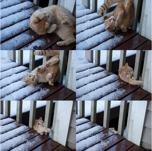 Cat Vs. Icy Porch