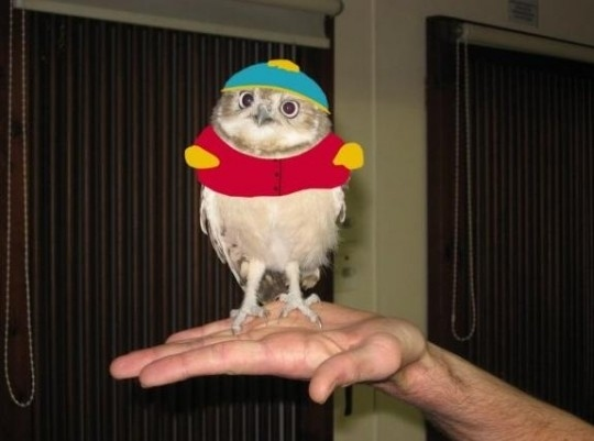Owl Cartman