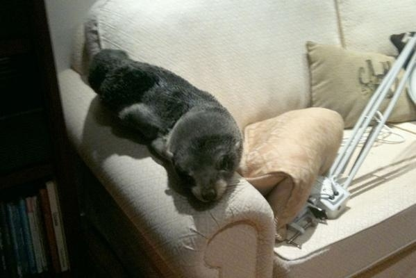 Seal Pup Invades New Zealand Home Via Cat-door