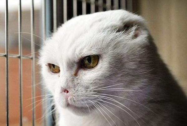 Behold! Voldemort Cat!