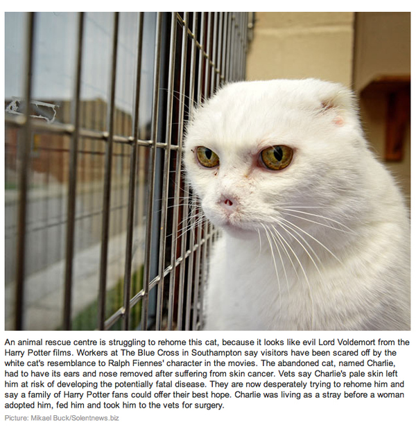 Homeless Voldemort Cat Needs A Home