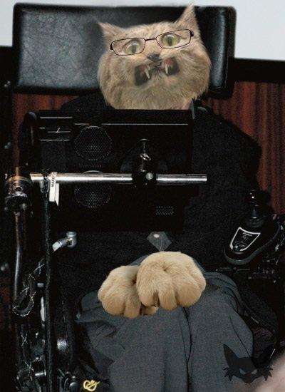 Stephen Hawkins As a Cat