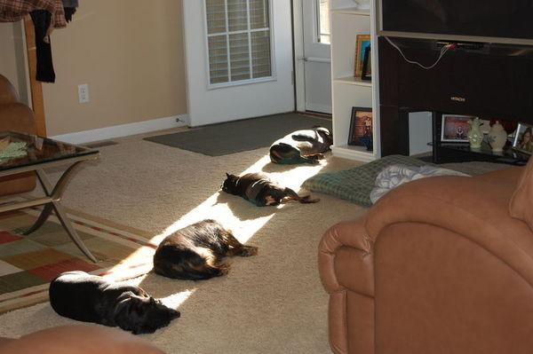Wanna Lay in the Sun?