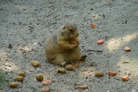 Marmot is Forever Alone