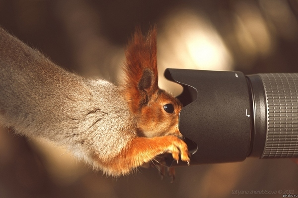 Say Cheese Squirrel