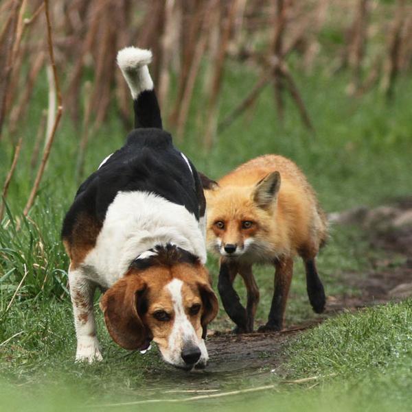 The World's Wort Hunting Dog
