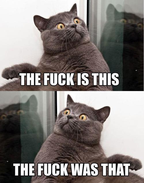 Confusion Cat