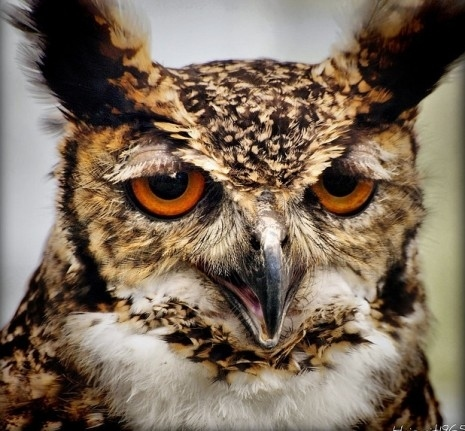 Owls With Funny Expressions On Their Faces