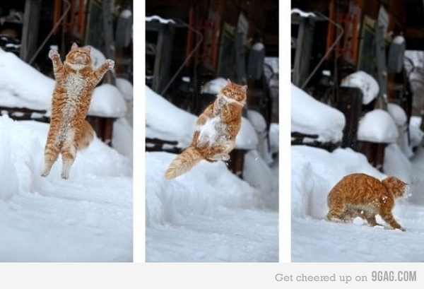 Kitty Snowball Interception