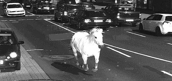 Runaway Horse Caught On Speed Camera