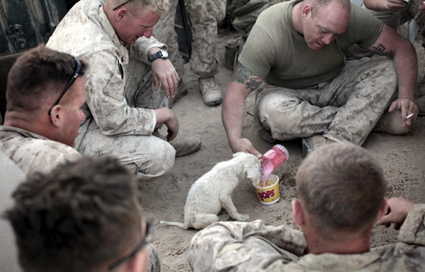 These Marines Are Awesome