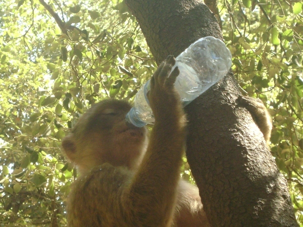 Give a Monkey a Bottle..