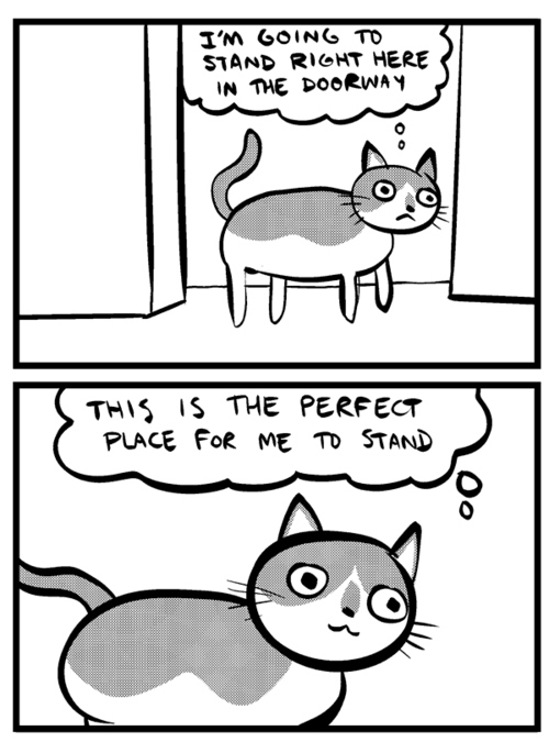 Where Cats Like to Stand