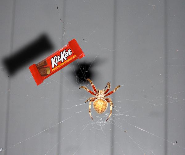 Kit Kat Spider