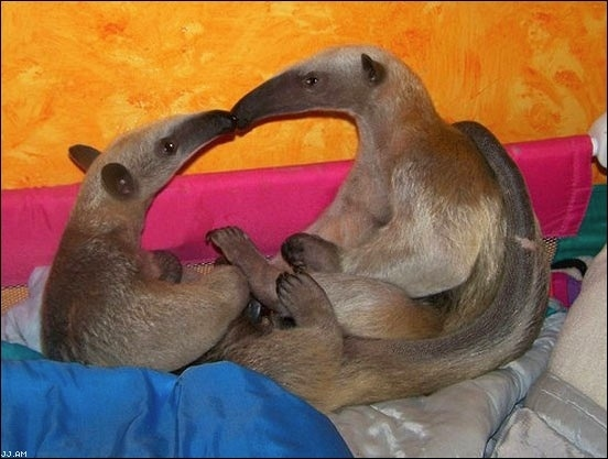 Anteater Make Outs!