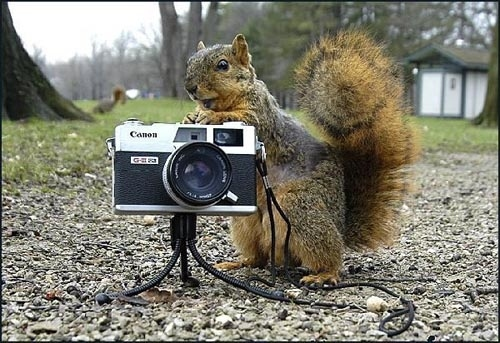 Breaking: Squirrel Crasher Planned It All Out Himself