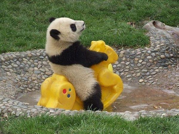 Panda Party!!!