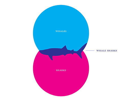 The Thing About Whale Sharks