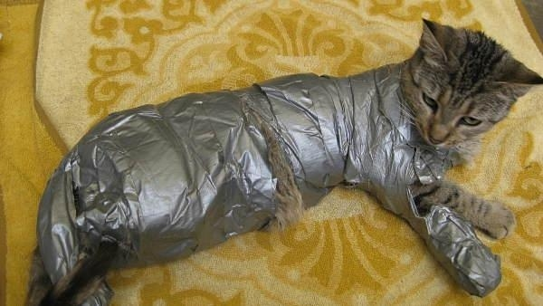 Cat Wrapped in Duct Tape