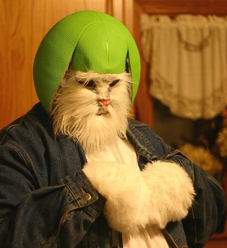 Grapefruit Cat Costume