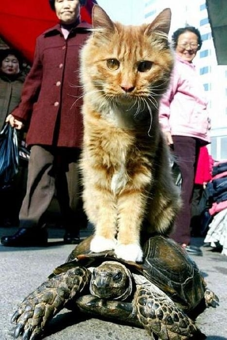 Turtle Transport