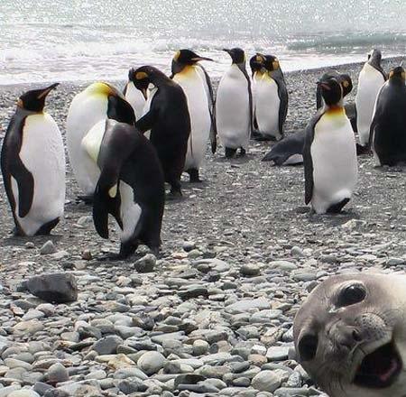 Seal Bomb