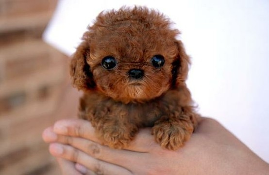 This Puppy's Cuteness Will Kill You