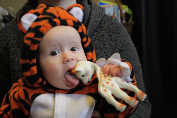A Very Graphic Image of A Tiger Eating a Giraffe