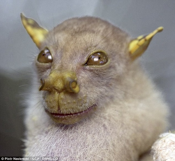 Bat Looks Like Yoda