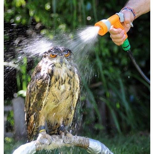 Real Life Angry Bird.