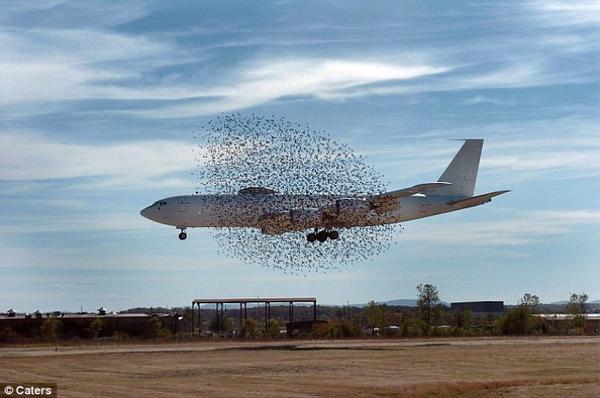 I'm More Than a Bird, I'm More Than a Plane: I'm a Birdplane
