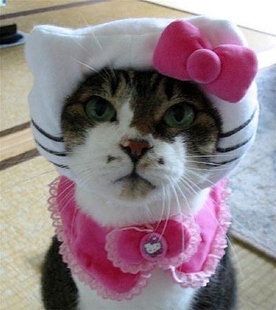 Hello Kitty IRL