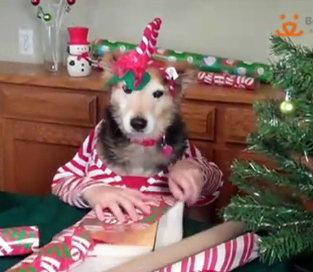Dogs Wrap Their Christmas Presents