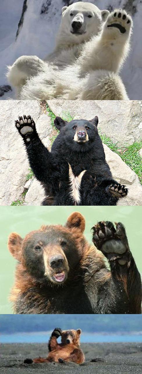 Wavy Bears Are Wavy