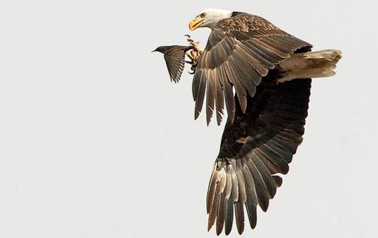 2009 National Wildlife Photo Winners