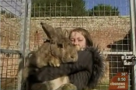 Now That is a Big A$$ Rabbit!
