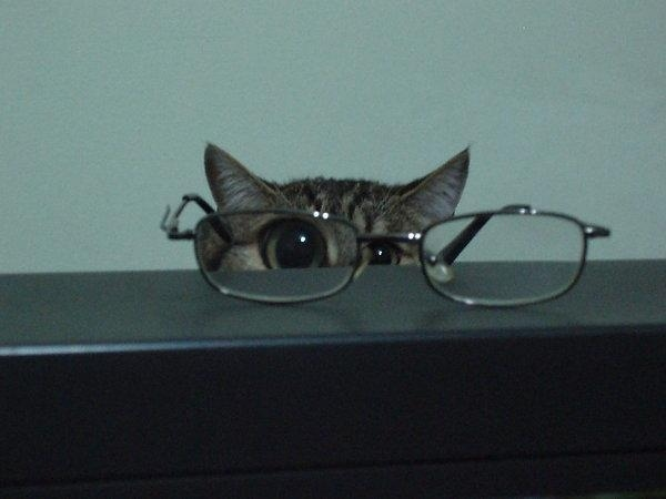 O_o Kitteh Thinkz Your Glasses Is Brokin