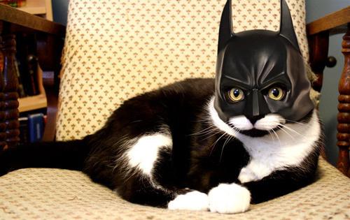 Batcatman