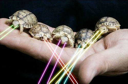 Baby Laser Turtles!