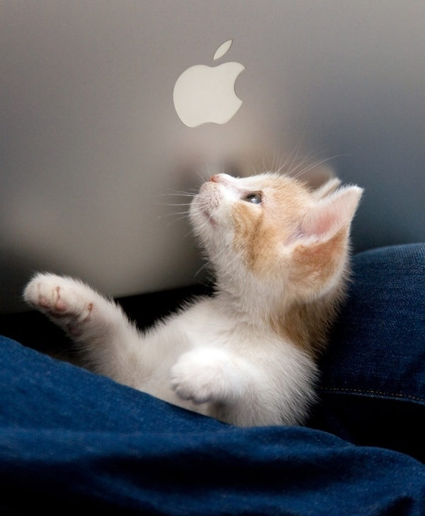 Can I Have an Apple?