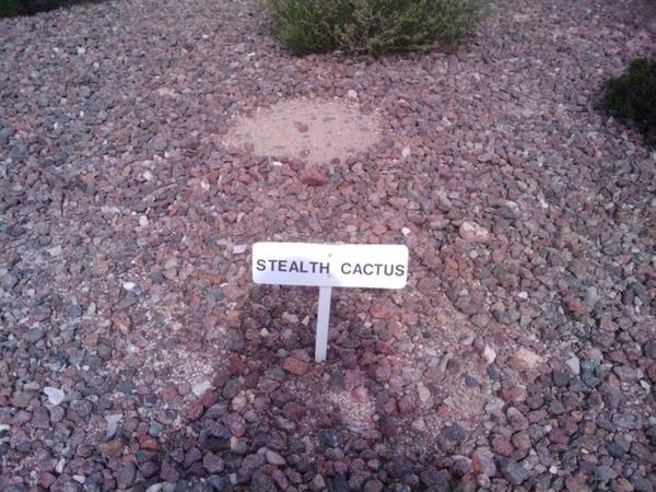 Stealth Cactus