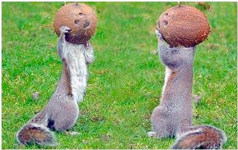 Astro Squirrels!