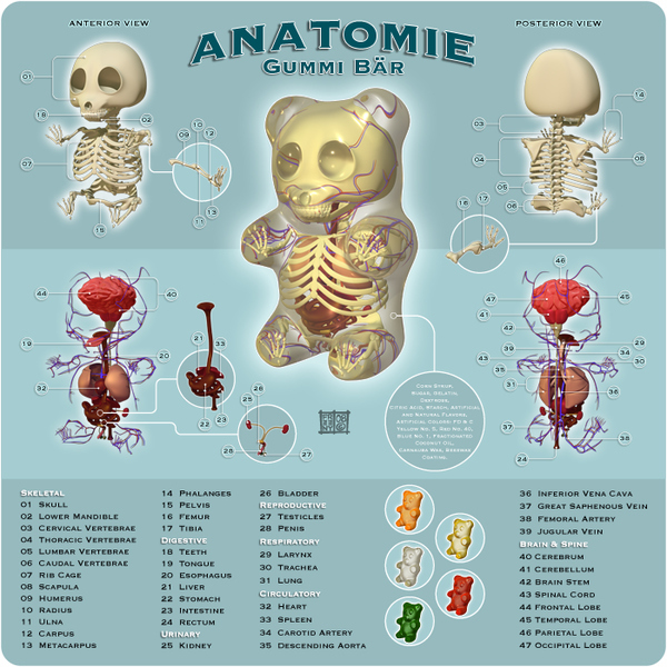 The Anatomy of A Gummy Bear