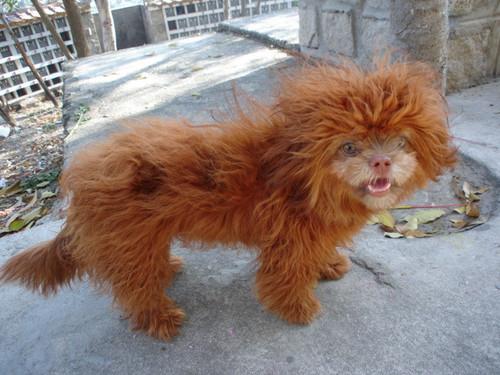 Muppet Puppy
