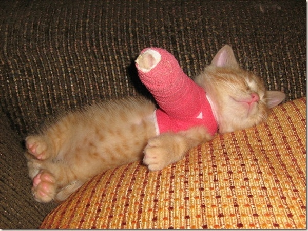 Kitten in a Cast