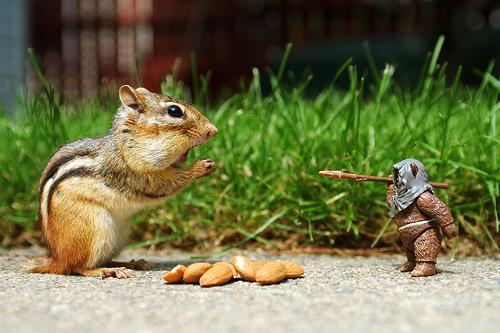 Ewoks Don't Eat Nuts