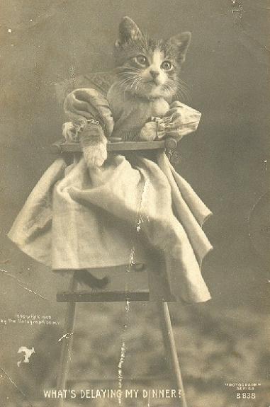 Vintage LOL Cat