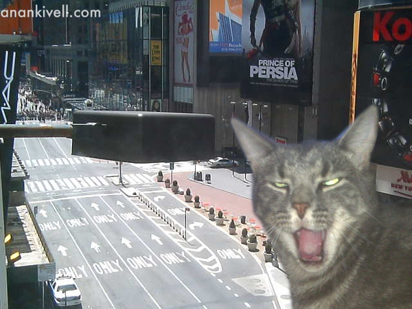 Police Evacuate Times Square Due to Suspicious-looking Kitteh