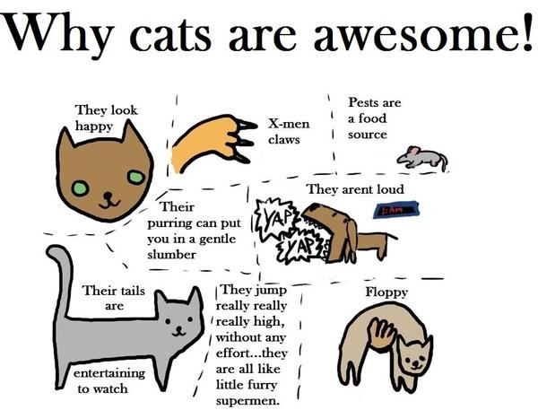Pro-Cat Propaganda