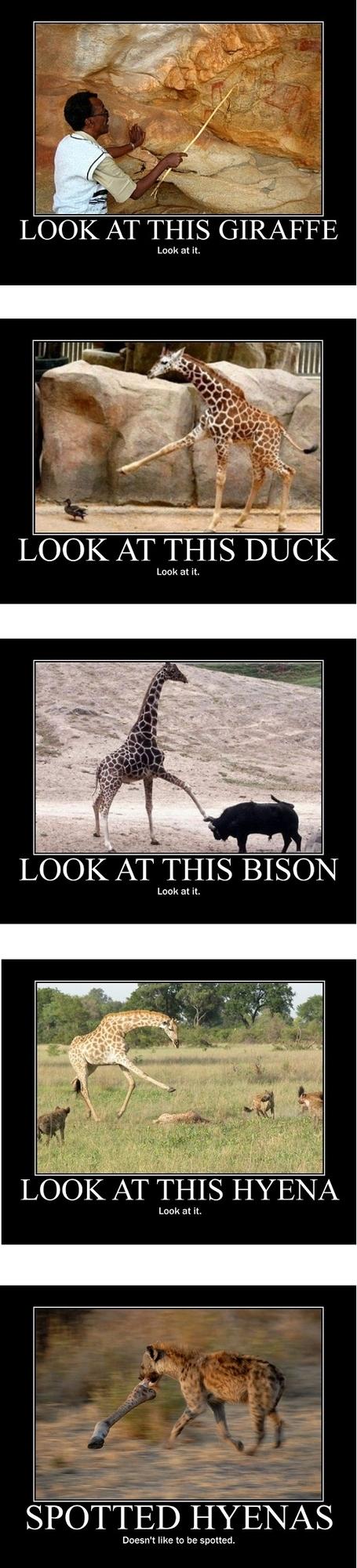 Look Giraffe